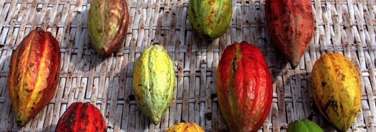 amedei semi cacao